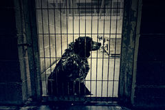 Hundezwingerruhe Lizenzfreies Stockbild