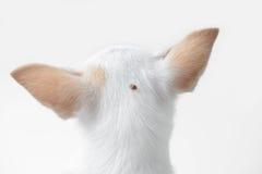 Hundfästing royaltyfri bild