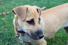 Hundfördjupning Arkivbild