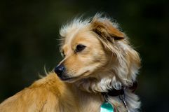 hundfamilj Royaltyfria Bilder