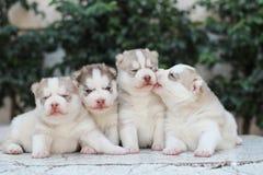 hundfamilj Arkivbild