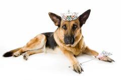 hundfeprincess arkivbild