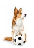 hundfotboll royaltyfri foto