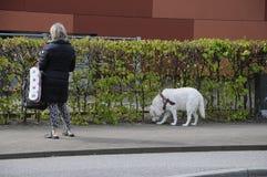 Hundfotgängare Royaltyfri Bild