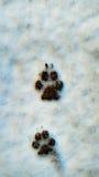 Hundfotspår i snön Arkivbild