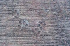 Hundfotspår på cement Royaltyfria Foton