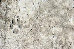 Hundfotspår på jord royaltyfria bilder