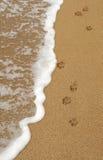 hundfotspår tafsar sanden fotografering för bildbyråer
