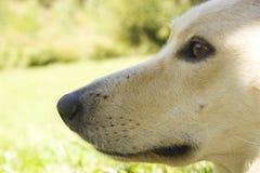 hundframsida Arkivfoton