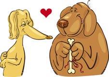 hundförälskelse Arkivbild