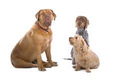 hundgrupp royaltyfri fotografi