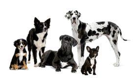 hundgrupp Arkivfoton