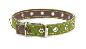 Hundhalsband Royaltyfria Bilder