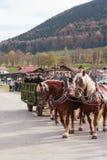 Hundham, Германия, Бавария 04 11 2017: Езда Leonhardi в баварском Hundham Стоковое фото RF
