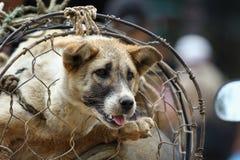 Hundhandeln i den Vietnam marknaden Arkivfoton