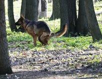 Hundherden Dog sket i parkera ekologisk miljöfotoförorening för kris solig dagfjäder Royaltyfri Fotografi