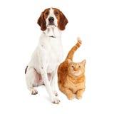 Hundhund och apelsin Cat Together Arkivbild