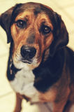 Hundhund på ett vitt tegelplattagolv Royaltyfria Bilder