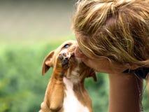 hundhundförälskelse två Royaltyfri Fotografi