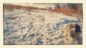 Hundih vintern royaltyfri bild