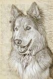 Hundillustration med en textbakgrund arkivbild
