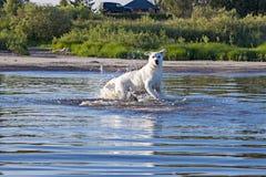 Hundkörningar på vatten royaltyfri fotografi