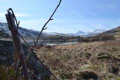 Hundkapplöpningögonsikt av Snowdonia royaltyfri foto