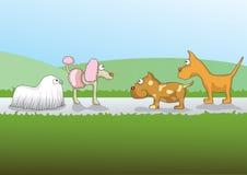 Hundkapplöpning Arkivbilder