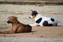 Hundkapplöpning Arkivfoton