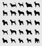 Hundkapplöpning Arkivbild