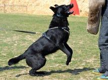 Hundkapplöpning 137 Arkivfoto