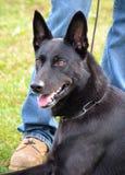 Hundkapplöpning 021 Royaltyfria Foton