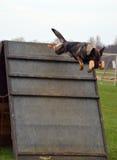 Hundkapplöpning 050 Royaltyfri Fotografi