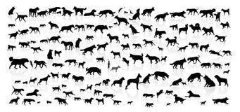 Hundkapplöpning av olika avel royaltyfri illustrationer