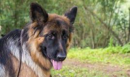 Hundkapplöpning av olika avel Arkivfoto
