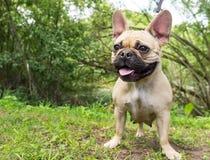 Hundkapplöpning av olika avel royaltyfri foto