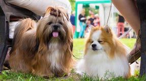 Hundkapplöpning av olika avel royaltyfri fotografi