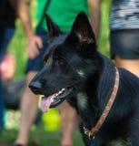 Hundkapplöpning av olika avel Royaltyfria Bilder
