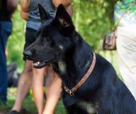 Hundkapplöpning av olika avel arkivbilder