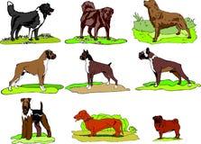 Hundkapplöpning av olika avel att bli på gräs, logo, tryck, ögonblicklig nedladdning, format för svg för uppsättning för hundgemk royaltyfri illustrationer