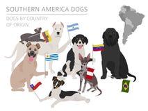 Hundkapplöpning av ursprungsland Latin - amerikanska hundavel Infographi royaltyfri illustrationer