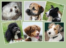 Hundkapplöpning collage arkivbilder