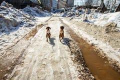 Hundkapplöpning i byn Royaltyfri Bild