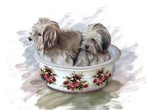 Hundkapplöpning i en keramisk handfat som dekoreras med rosor Royaltyfria Bilder
