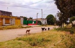 Hundkapplöpning i gatorna royaltyfria bilder