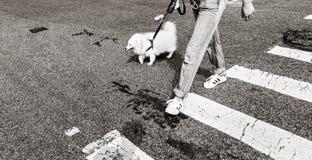 Hundkapplöpning i New York City Royaltyfri Foto