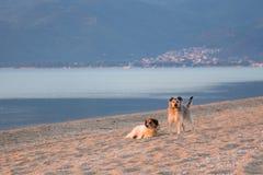 Hundkapplöpning i sand royaltyfri bild
