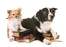 Hundkapplöpning i skola arkivbild