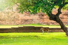 Hundkapplöpning i trädgården på gräsmattan Arkivfoto