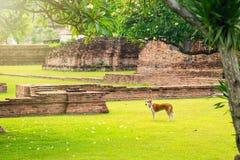 Hundkapplöpning i trädgården på gräsmattan Royaltyfria Foton